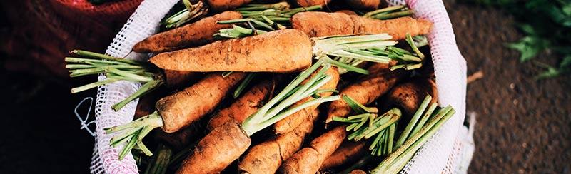 Photographie d'aliments bio, en l'occurence des carottes encore recouvertes de terre dans un sac