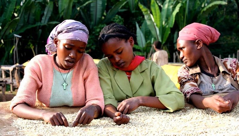 Femmes africaines triant des grains de café blanc sur une exploitation en Éthiopie.