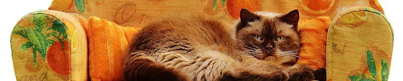 Photographie d'un chat sédentaire affalé sur un canapé. La sédentarité augmente les risque de NASH, la maladie du soda
