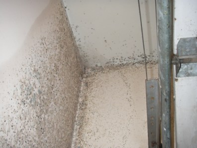 There is often a high level of moisture or condensation which breeds various kinds of mold in the home which is also hazardous to a person's health. Pollen released from the plants can also trigger allergic reactions in some people.
