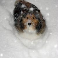blizzdog