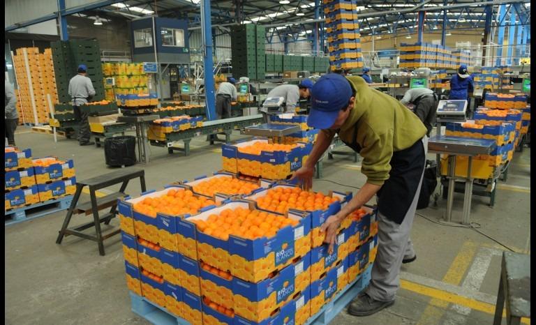 Exportaciones de Coquimbo aumentan 15% con respecto al año pasado