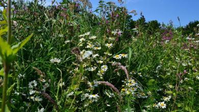 Photo of Bermen vol bloemen en bijen