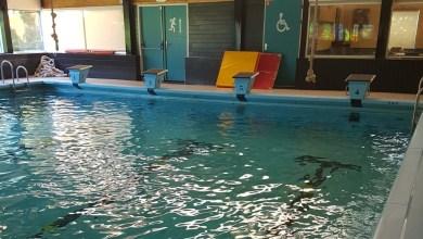 Photo of Draag de zwembaden over aan HOZE