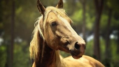 Photo of Geen opruimplicht paardenpoep