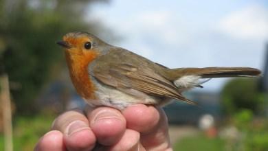 Photo of Vogelonderzoek bij Helderse Vallei