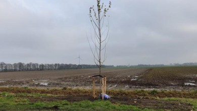 Photo of Volop bomenplant in Hollands Kroon