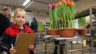 Photo of Nick wint tweede tulpenkeuring