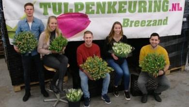 Photo of Wie wordt de tulpenkeurkampioen?