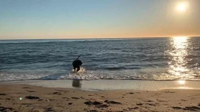 Photo of Bescherm je hond tegen de warmte (video)