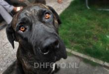 Photo of Gemeente roept op: honden aan de lijn!