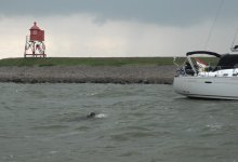 Photo of Gert Jan zwemt IJsselmeer over (video)