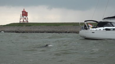 Photo of Gert Jan zwemt IJsselmeer over (video)