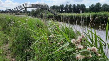 Door de weilanden langs water met rietkragen richting Waarland.