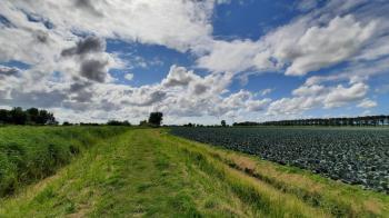 Ook hier weer landbouwgrond vol met koolsoorten.