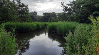 Quelderduijn is een oase van rust tussen het Centrum en De Schooten