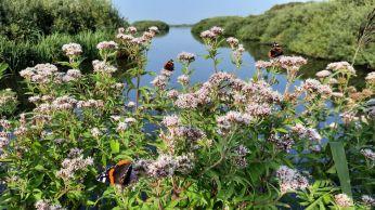 De struiken bij het kanaaltje zitten vol met fladderende vlinders.