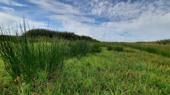 Gevarieerd groen in deze polder