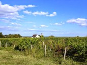 Les vignes (cru Vouvray)