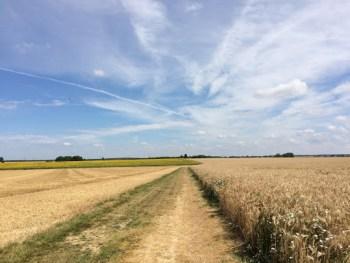 champs de blé et tournesols