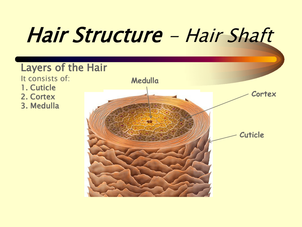Relaxers Amp How To Minimise The Risk Of Hair Loss When Retouching Part 1 Rehairducation
