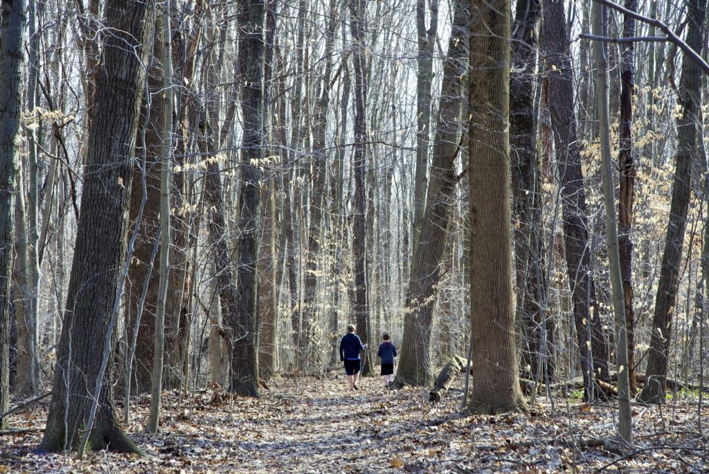 Two hikers along the trail at Warren Woods.
