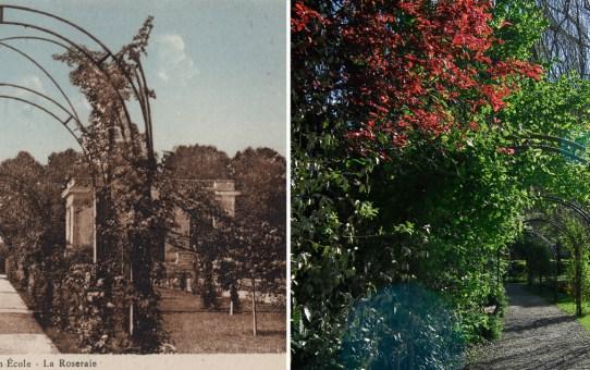 La Roseraie du Jardin École, actuel Jardin d'Horticulture Pierre Schneiter