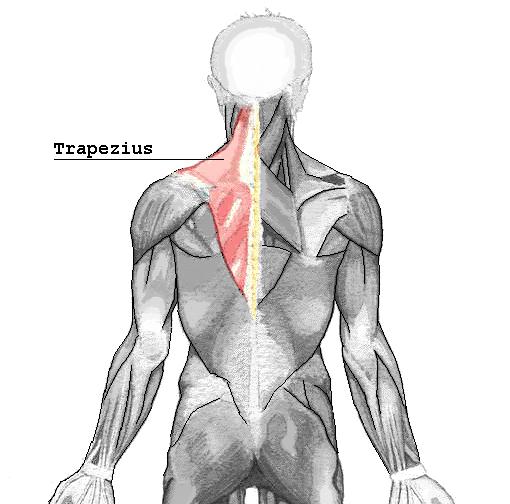 M. trapezius: Einfache und leichte Dehnung des Kapuzenmuskels