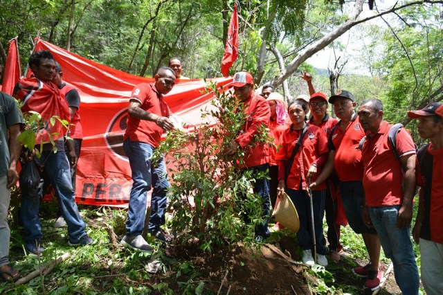 Foto DPC PDI Perjuangan Flores Timur Tanam Pohon Di Kawasan Hutan Gunung (Ile) Mandiri