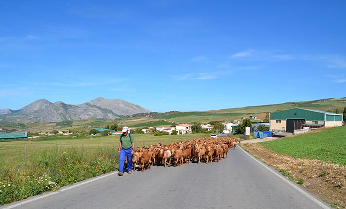 Roadtrip Europa: Spanje