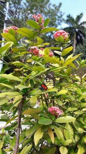 Schmetterlinge im Kowloon Park