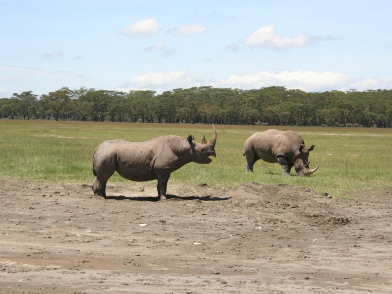 Die Top 5 (aus 5) der Safaris