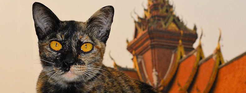Tempel Hüpfen in Chiang Mai in Thailand