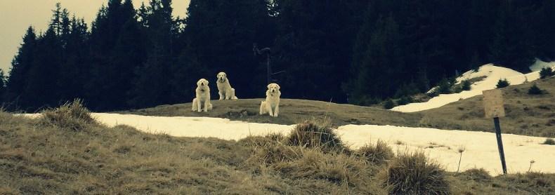 Auf Bärensafari in Transsilvanien