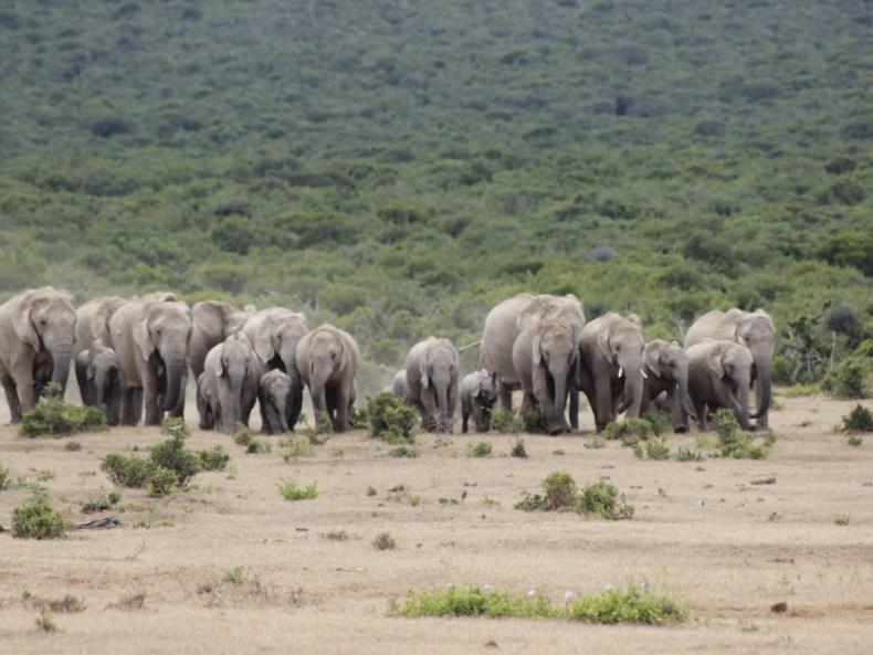 Elefantenland