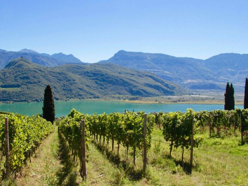 Weinselig in Südtirol