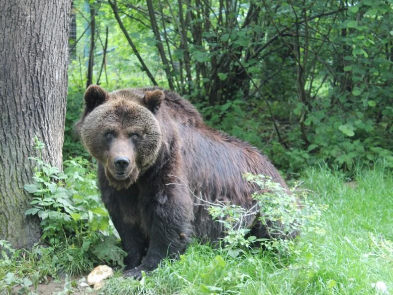 Siebenbürgen – im Land der großen Bären
