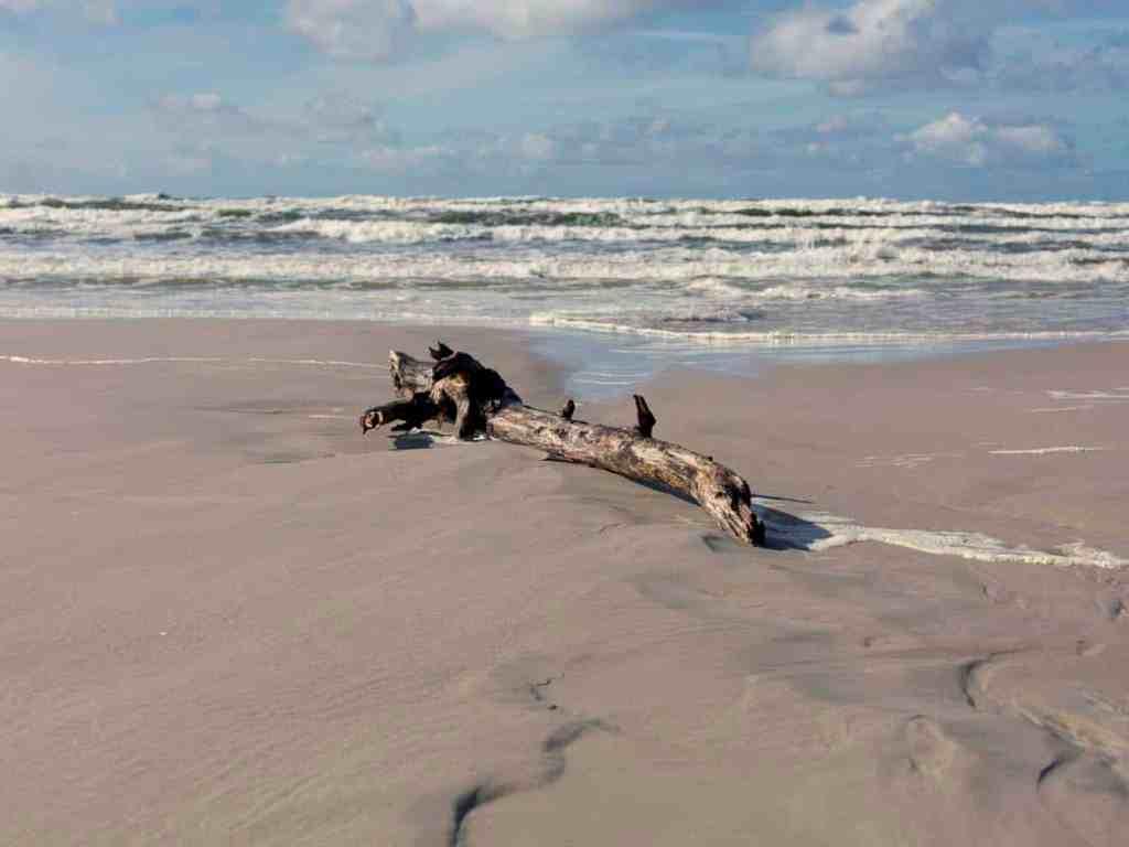 Strandgut an der Kurischen Nehrung