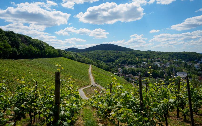 Wijngaarden bij Bonn