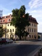 Goethe Musikschule Ginkobaum