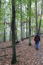 Canon 100d Weltreise Herbst Brandenburg Wald Hund