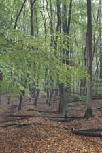 Canon 100d Weltreise Herbst Brandenburg Wald