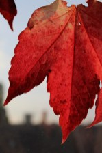 Canon 100d Weltreise Herbst