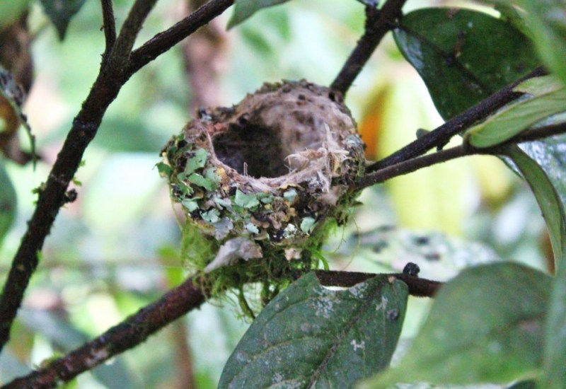 Kolibrinest