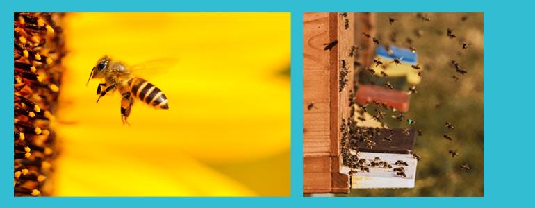 Dieses Bild hat ein leeres Alt-Attribut. Der Dateiname ist Bienenpartenschaft-1.jpg