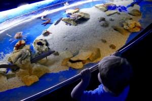 Aquarium von Pula