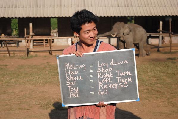Reisetips om elefantridning i Thailand.