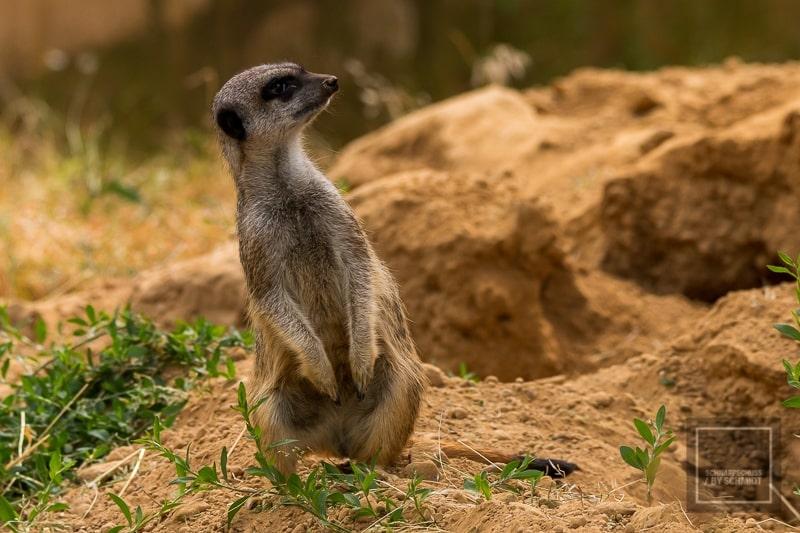 Unsere Zoos in NRW: Ein Zoo im Herzen Kölns 1