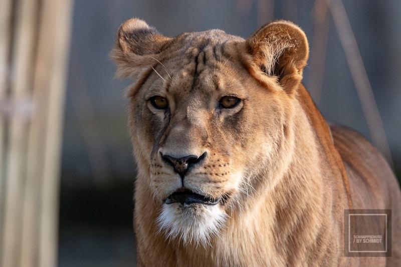 Jahresrückblick - Zoo Münster