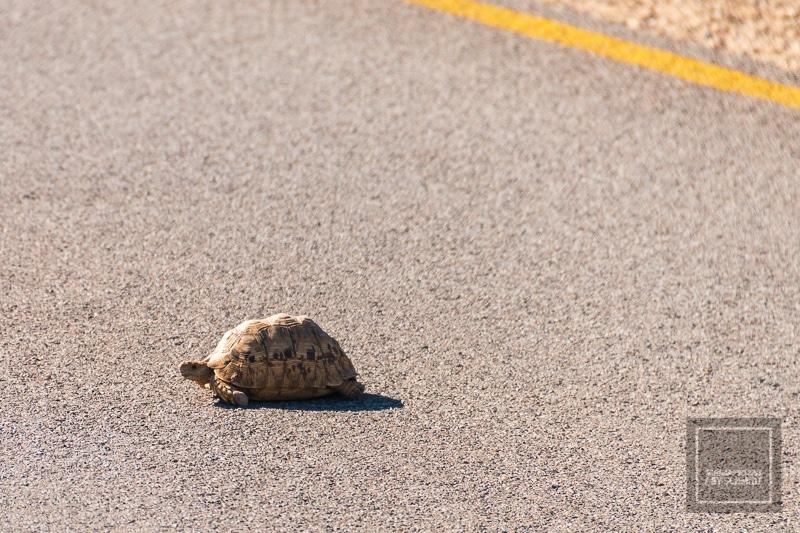 Etosha National Park - Schildkröte